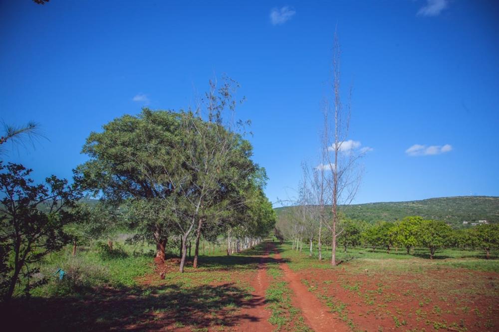 Land  - Namaacha [7]