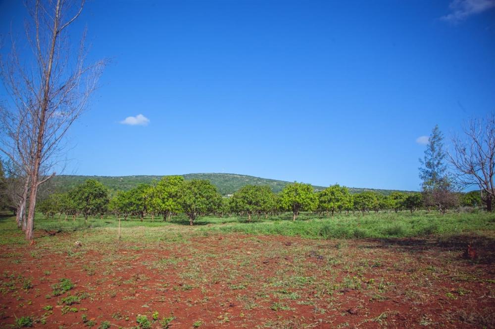 Land  - Namaacha [8]